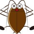 ゴキブリが歩く