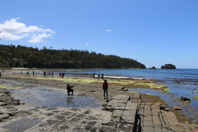 Tessellated Pavement