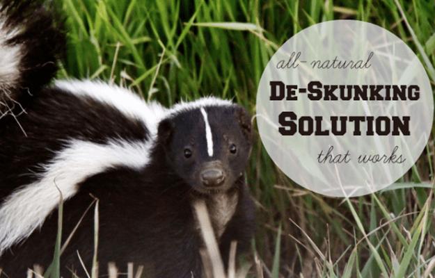 DIY-De-Skunking-Spray