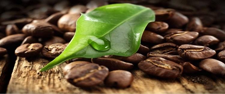 Mai Thai Coffee
