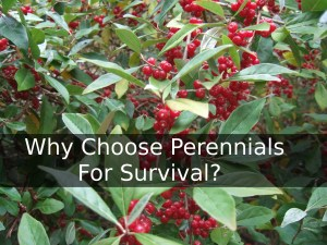 Why Choose Perennials For Survival?