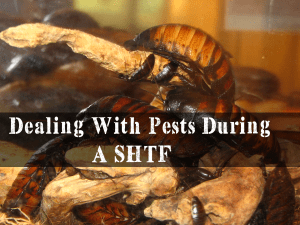 Dealing With Pests During A SHTF | episode 197
