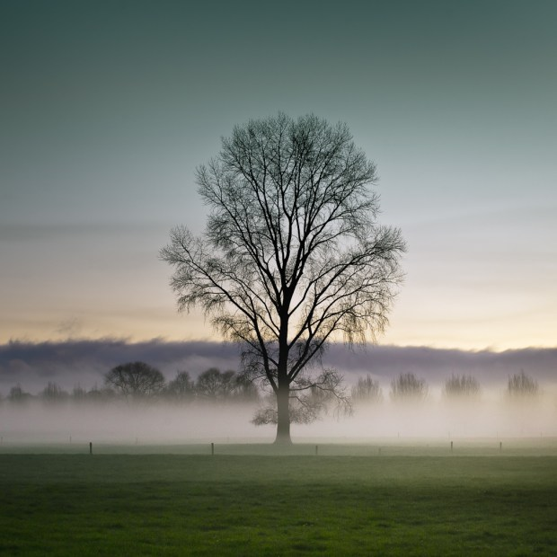 Why Trees Are So Important To The Environment?