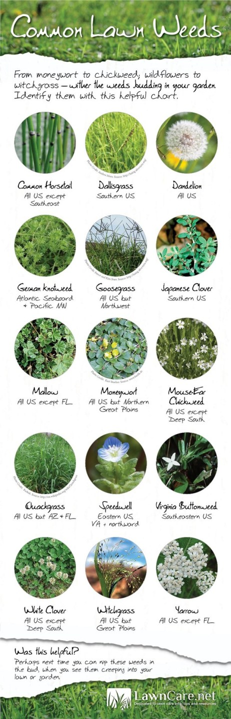 Weeds in your garden