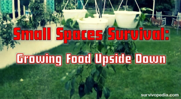 survivopedia-small-spaces-survival-growing-food-upside-down