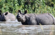 Rhino to be gifted to China captured