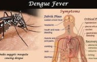 Three Terai districts at high risk of Dengue