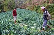 असिनापानीले तरकारी बालीमा रु २५ लाख बढीको क्षति