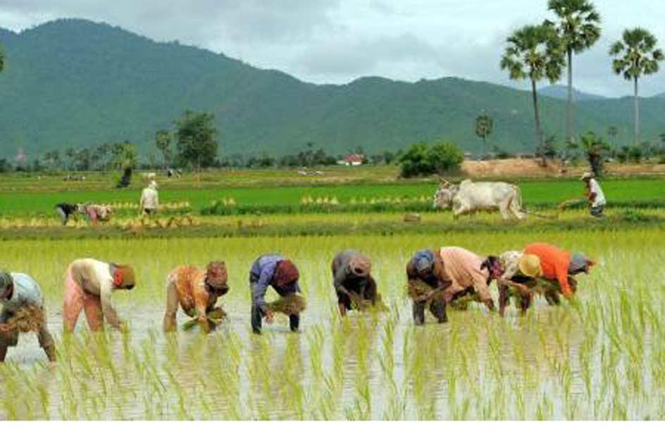 बाँसगढीमा प्रदेशस्तरीय रोपाइँ महोत्सव