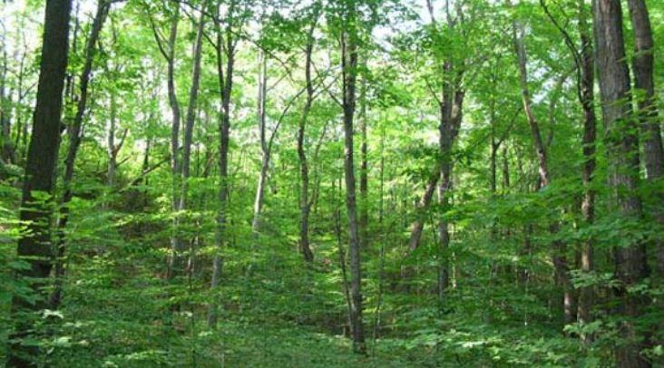वन क्षेत्रको क्षतिपूर्ति तिर्न सम्बन्धित आयोजनाले बेवास्ता