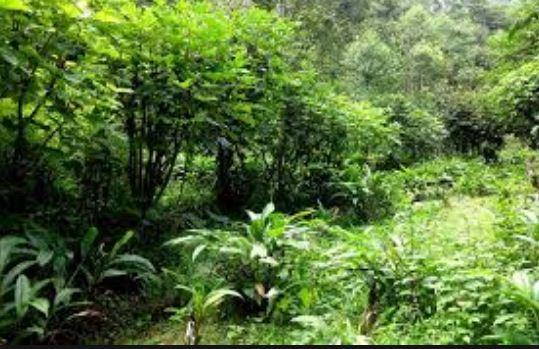 हरियाली र फलफूलमा आत्मनिर्भर बनाउने अभियान