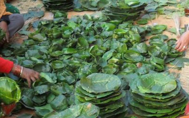 थारू महिलाको सामूहिक दुना–टपरी उद्योग फस्टाउँदै