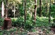 ८९४ हेक्टर वन क्षेत्र अतिक्रमणको चपेटामा