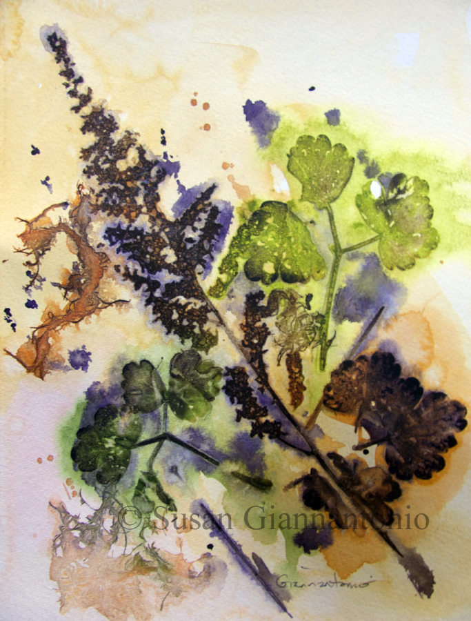 """Mayville Fall 2014 Botanical, 11 x 9"""" watercolor on paper"""