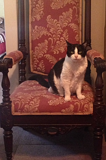 Delilah in antique chair