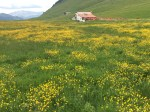 Alpage at the Col des Aravis.