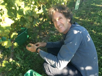michael harvesting grapes