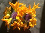 zucchini and thistle flowers