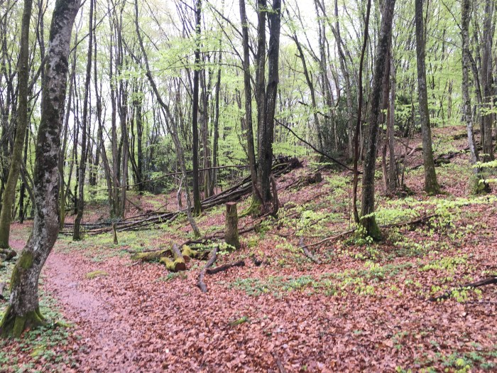 the woods above Lac Leman