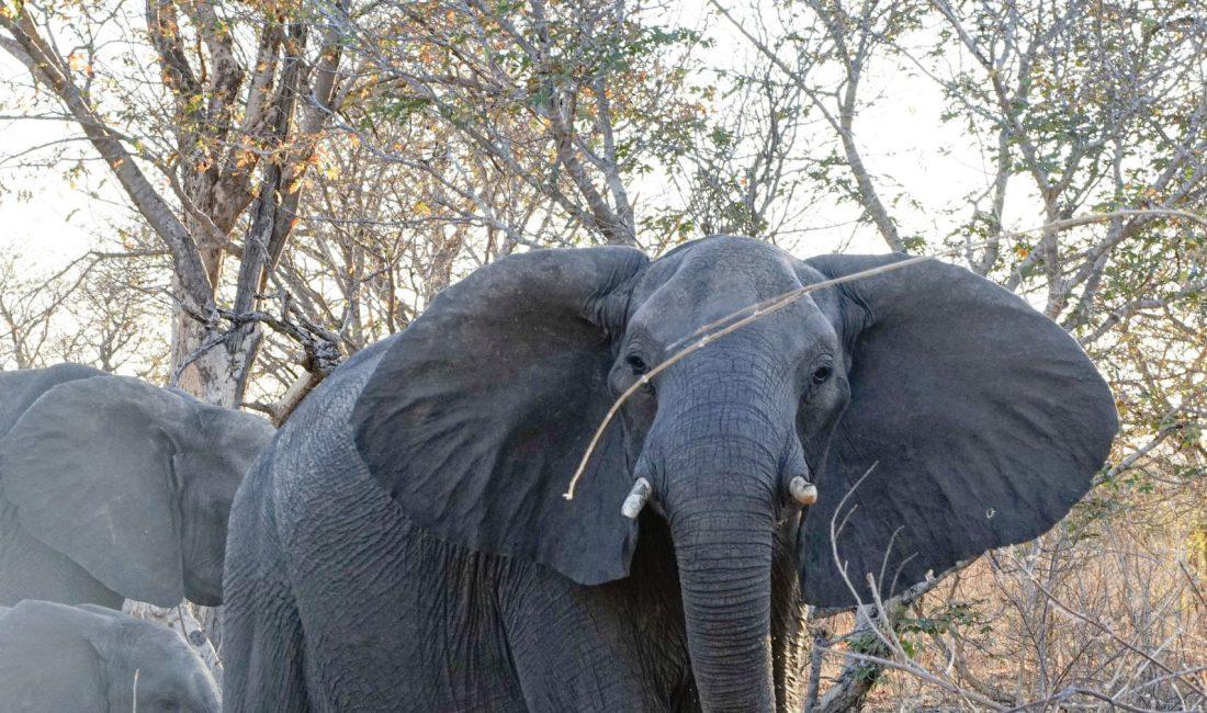 Namibia Rundreise Elefant