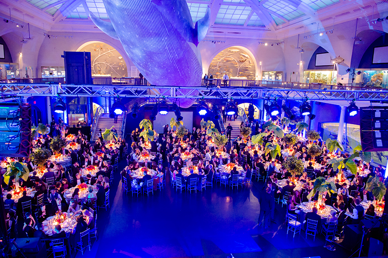 museum of natural history wedding nyc venue