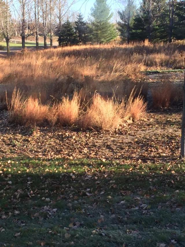 pheasant-hiding-place