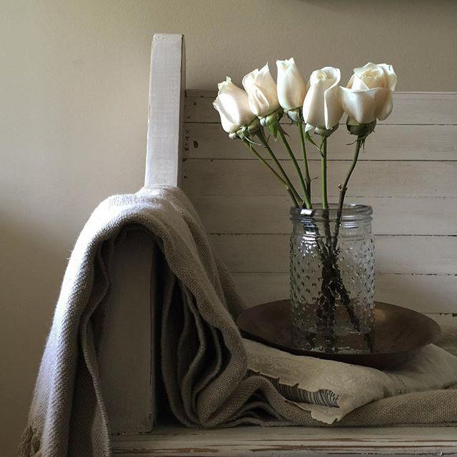 Vendula Roses Susie Davis