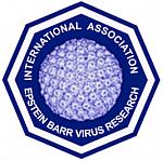 EBV Association