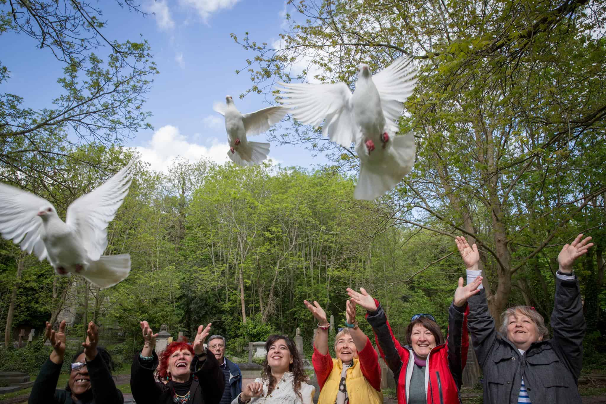 Sussex dove release