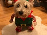 Maisie enters St Barnabas Hospice Christmas 2018 pet photo charity competition