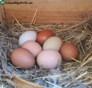 different colored eggs
