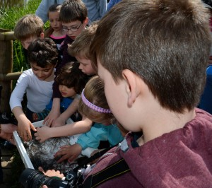 The youngsters loved helping the elvers!