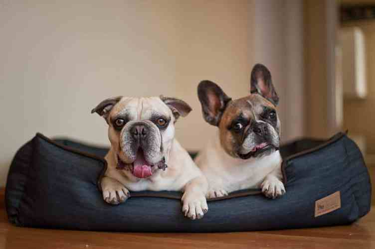 Eco-Friendly Pet Products to Make Pets Sustainable, One ...