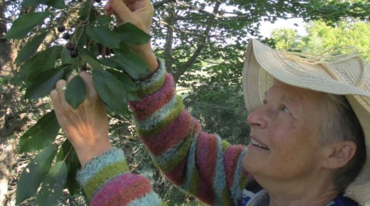 Opportunity: Calling all Scottish Foragers in Scotland