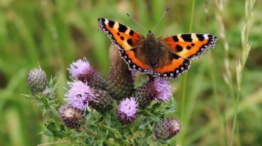News: New wildlife photo exhibition on show in Edinburgh