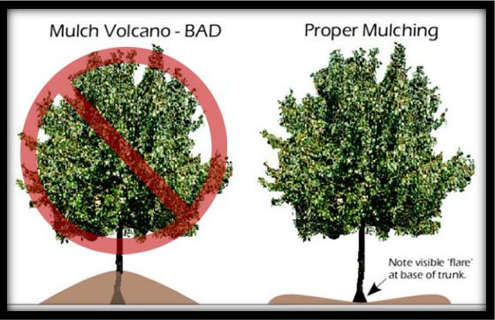 mulchvolcano