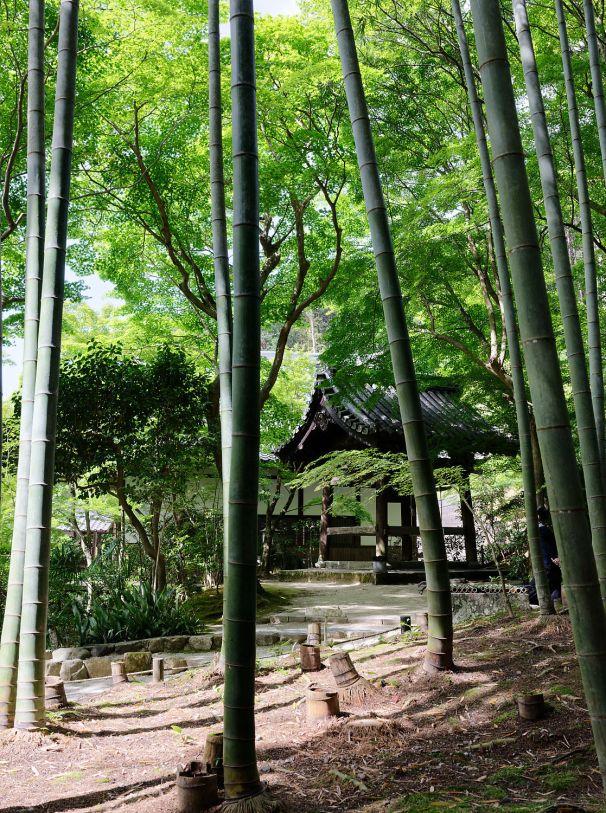 071 - Bambous