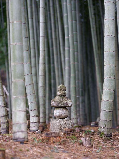 061 - Bambous