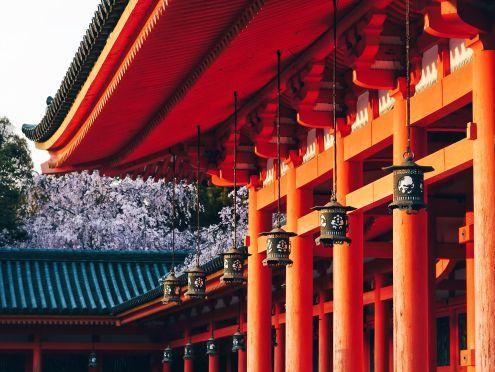079 - Heian Jingu Sakura