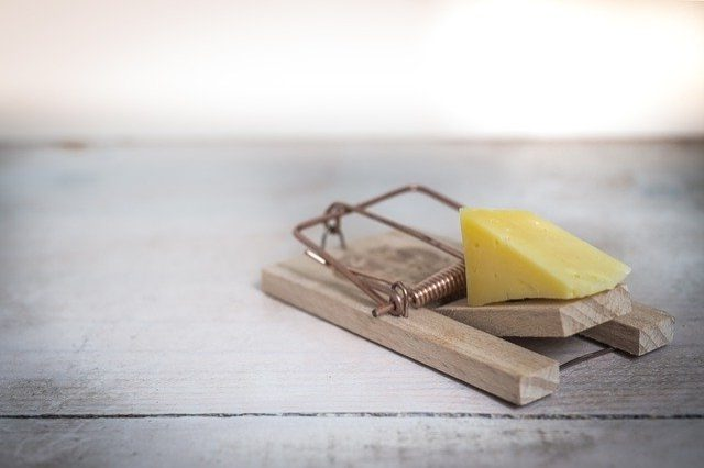 picture of a mouse trap with cheese as bait