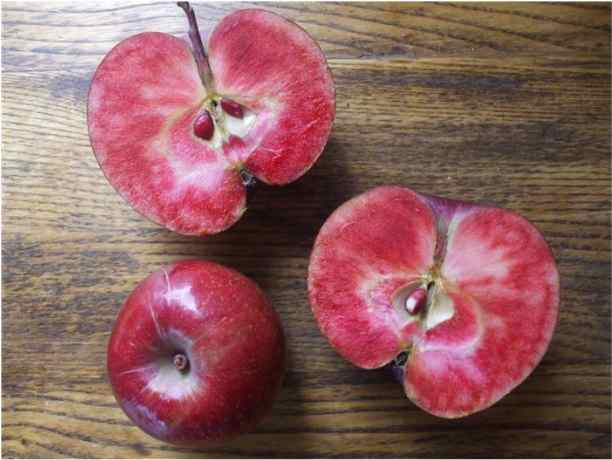Image result for purple passion apple