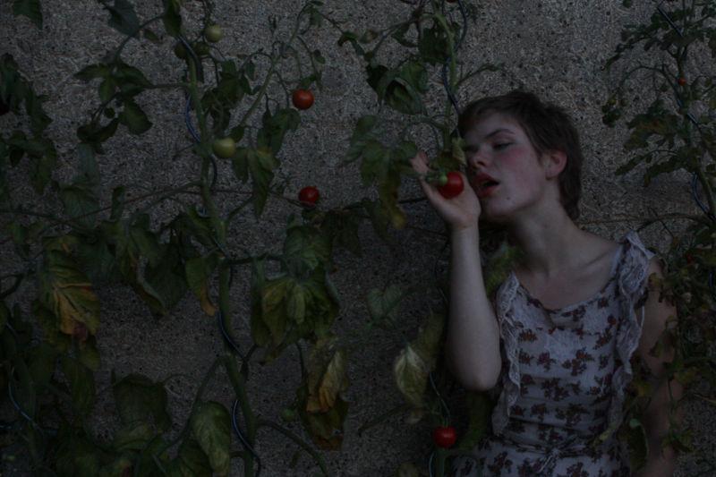 ein Lied: in den Tomaten2
