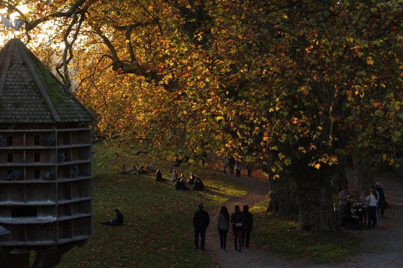 Die Platanenallee in der Herbstsonne mit Taubenhaus
