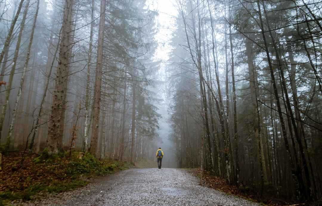person standing between tall trees surrounded by fogs