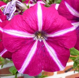 bloem met kleur inspiratie