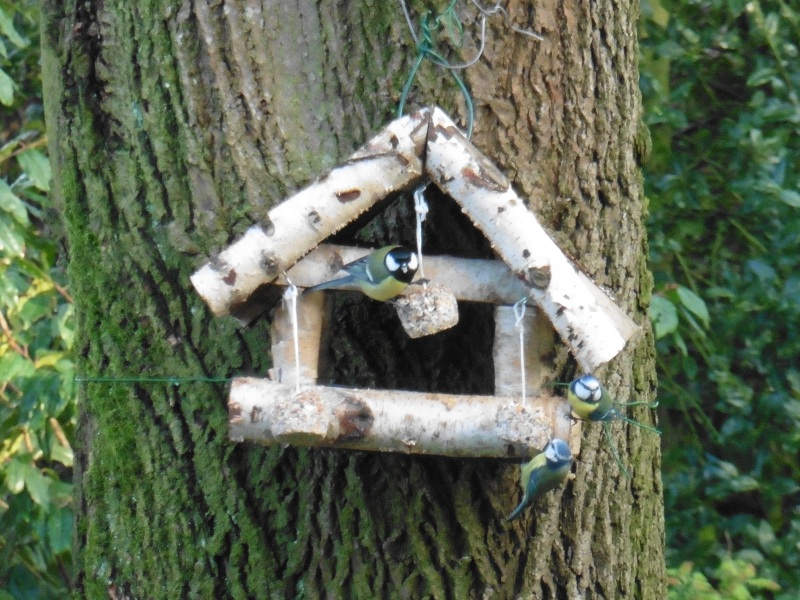vogelvetbollen-maken