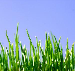 511037_green_grass