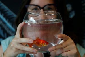 akvarij ribice