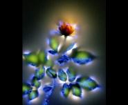 kirlian photo of flowers