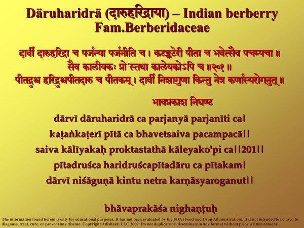 Daruharidra - Learn About the Immune Enhancing Properties of Tree Turmeric